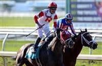 /horse/International Star