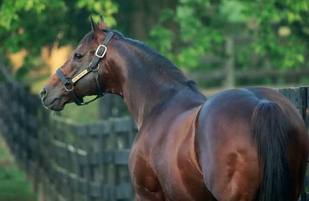 Farms file lawsuit against Jockey Club opposing stallion cap