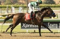 /horse/Iotapa