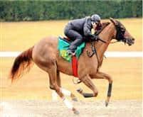 /horse/Jordy Y