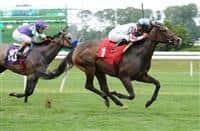 Josdesanimaux wins at Belmont Park (7-15-15)