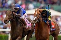 /horse/Judy The Beauty