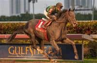 Just Call Kenny with jockey Joe Bravo winning the Spectacular Bid stakes for 3 year olds at Gulfstream Park. Hallandale Beach, Florida 01-04-2014