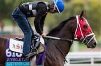 ARCADIA, CA - OCT 31: Kitten's Cat, owned by Kenneth L. and Sarah K. Ramsey and trained by Joe Sharp, exercises in preparation for the Breeders' Cup Juvenile Turf at Santa Anita Park on October 31, 2016 in Arcadia, California. (Photo by Douglas DeFelice/Eclipse Sportswire/Breeders Cup)