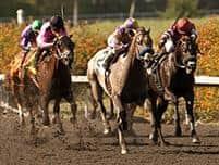 /horse/Kobes Back