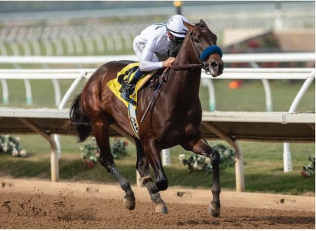 Betting odds belmont stakes 2021odds pelaw grange betting sites