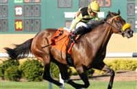 Lovely Loyree wins 2016 Indiana General Assembly Distaff