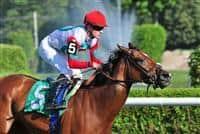 /horse/La Reine Lionne