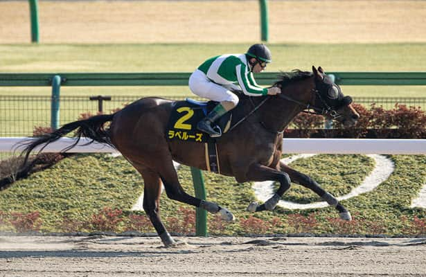 Horses to Watch: La Perouse, a Derby contender from Japan