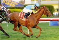 /horse/Lady Haddassah