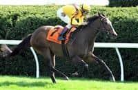 /horse/Lady Aurelia