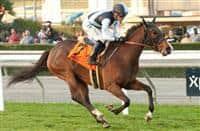 Lady Valeur wins at Santa Anita (2-13-16)