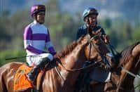 """September 26, 2015: Land Over Sea in the post parade for the Breeders' Cup """"Win and You're In"""" Chandelier Stakes at Santa Anita Park in Arcadia, California. Zoe Metz/ESW/CSM"""