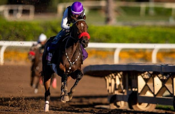 Lazy Daisy's Fantasy Stakes try 'something to build on'