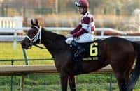 Liora_horse_Golden Rode 2018_615x400