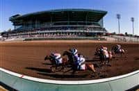 July 05, 2014: Shared Belief with Mike Smith aboard defeats Candy Boy to win the Los Alamitos Derby at Los Alamitos Race Course in Cypress CA. Alex Evers/ESW/CSM