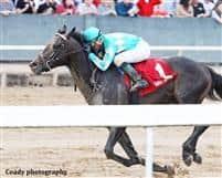 /horse/My Boy Jack