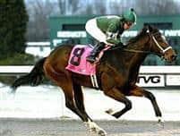 /horse/Mac The Man