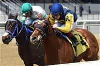 /horse/Maven 2