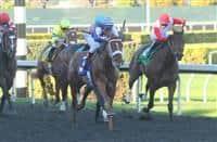 Metaboss El Camino Real Derby 615 X 400