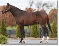 /horse/Millennium Wind