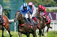 Sussex stakes betting websites sports betting comparisons
