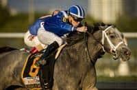/horse/Mohaymen