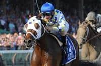 /horse/Moreno