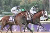 /horse/Mucho Macho Man