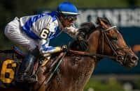 /horse/Mucho