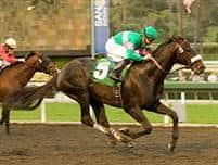 /horse/Neko Bay