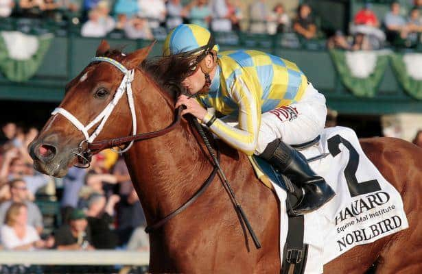 Casse hopes Noble Bird has another big-race effort in him