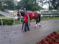 Nonna's Boy in the Belmont Park paddock.
