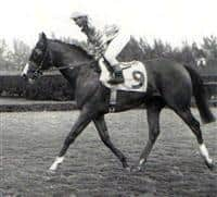 /horse/Northern Dancer