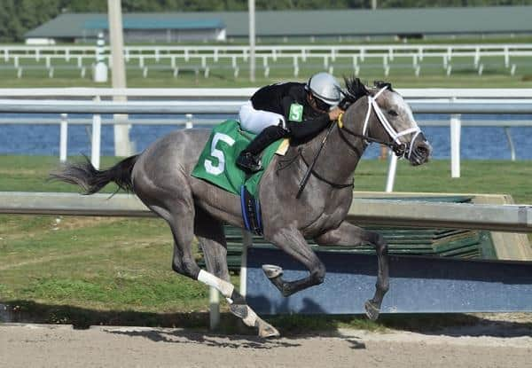 Analysis: Ny Traffic can upset Authentic in Haskell Stakes