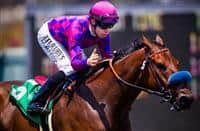 """Joe Talamo pats Obviously on the neck for a job well done after winning the 2013 running of the Shoemaker Mile Stakes, a Breeders' Cup """"Win and You're In"""" race at Betfair Hollywood Park in Inglewood, CA on June 15, 2013. (Alex Evers/ Eclipse Sportswire)"""
