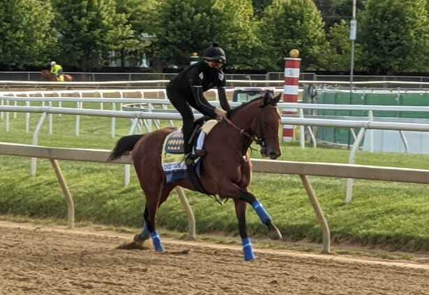 Not all Medina Spirit; Preakness rivals are getting work done