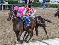 /horse/Pacific Pink