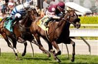 Papacoolpapacool, winner of the 2015 Pasadena Stakes