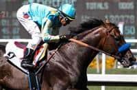 /horse/Paynter
