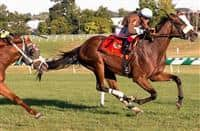 Phlash Phelps wins 2015 Find Stakes
