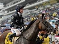 /horse/Presvis