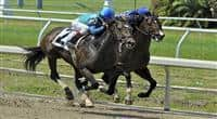 Bind (inside) finishes second to Prime Cut in the 4th race during Louisiana Derby Day on March 26, 2011 at the Fair Grounds in New Orleans, Louisiana. (Bob Mayberger/Eclipse Sportswire)