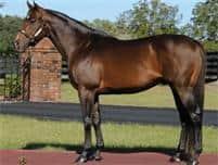 /horse/Proud Accolade