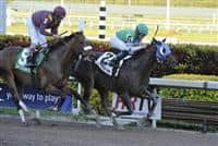 Reveron (no. 2), ridden by Fernando Jara and trained by Augustin C. Bezara, wins the 1st running of the Gulfstream Park Derby for three year olds on January 1, 2012 at Gulfstream Park in Hallandale Beach, Florida. (Bob Mayberger/Eclipse Sportswire)
