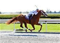 Red Rifle winning an Allowance Optional Claiming race at Keeneland.
