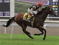 /horse/Rahys Attorney
