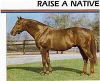 /horse/Raise A Native