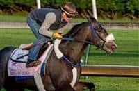 /horse/Restless Rider