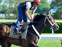 /horse/Ride On Curlin